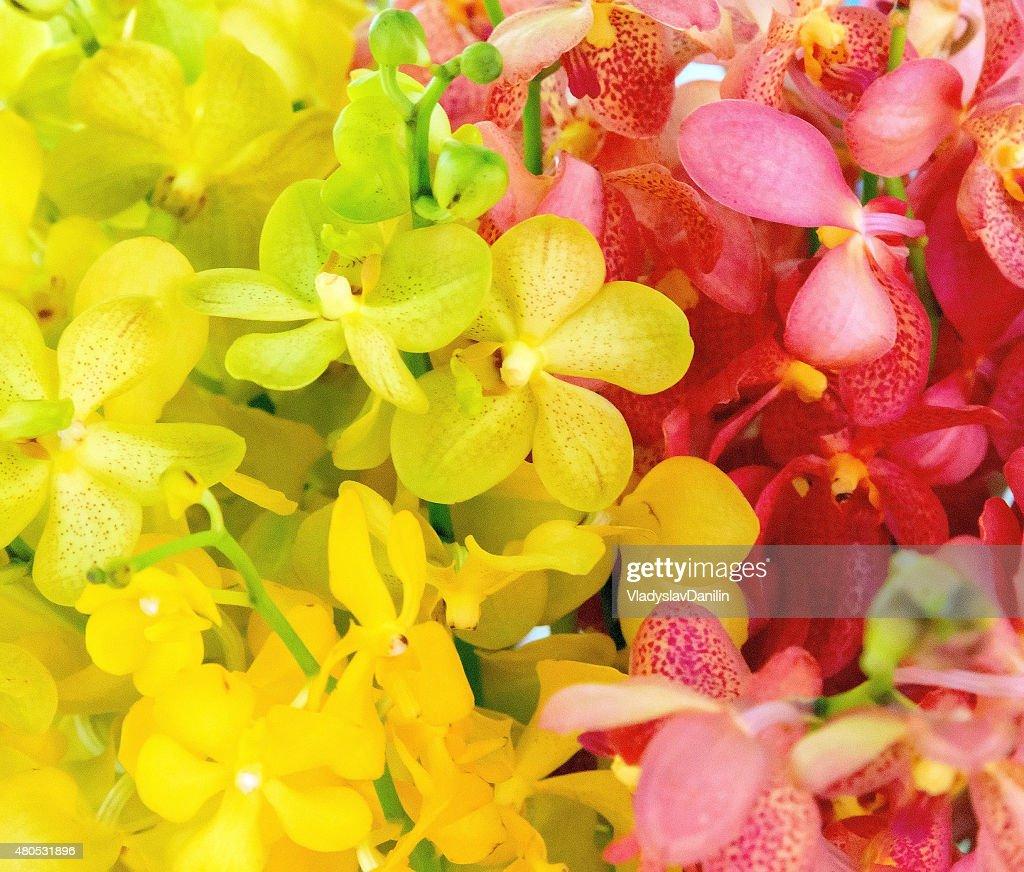 花の背景 : ストックフォト