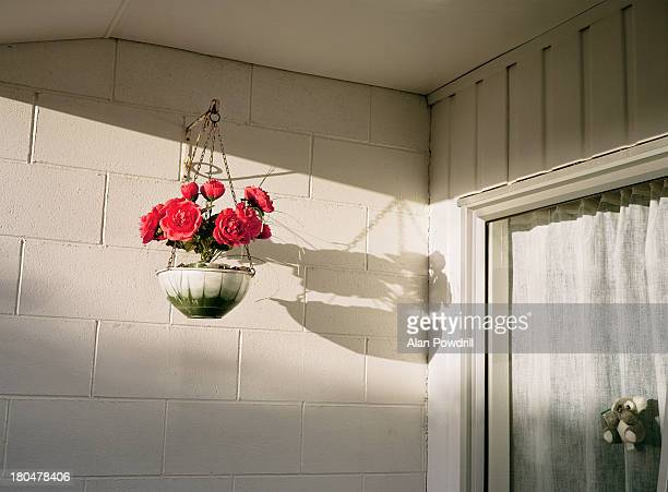 Flower basket and fluffy bear in window