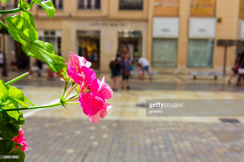 Flor Linda Rosa Cravo : Foto de stock