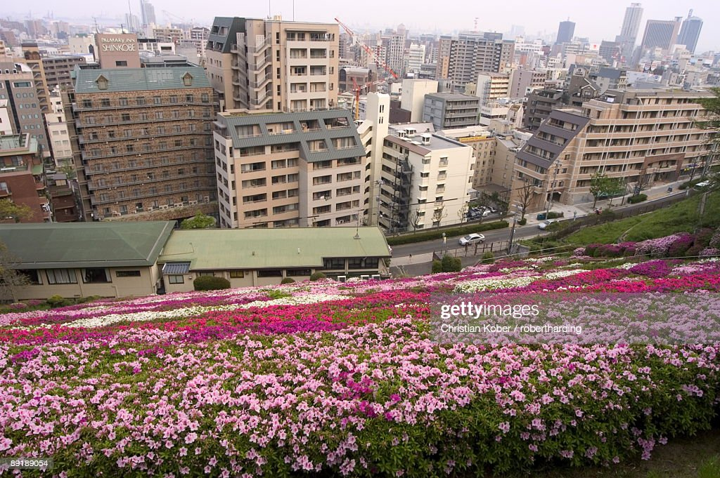 Flower bed, view of city, Kobe city, Kansai, Honshu island, Japan, Asia : Stock Photo