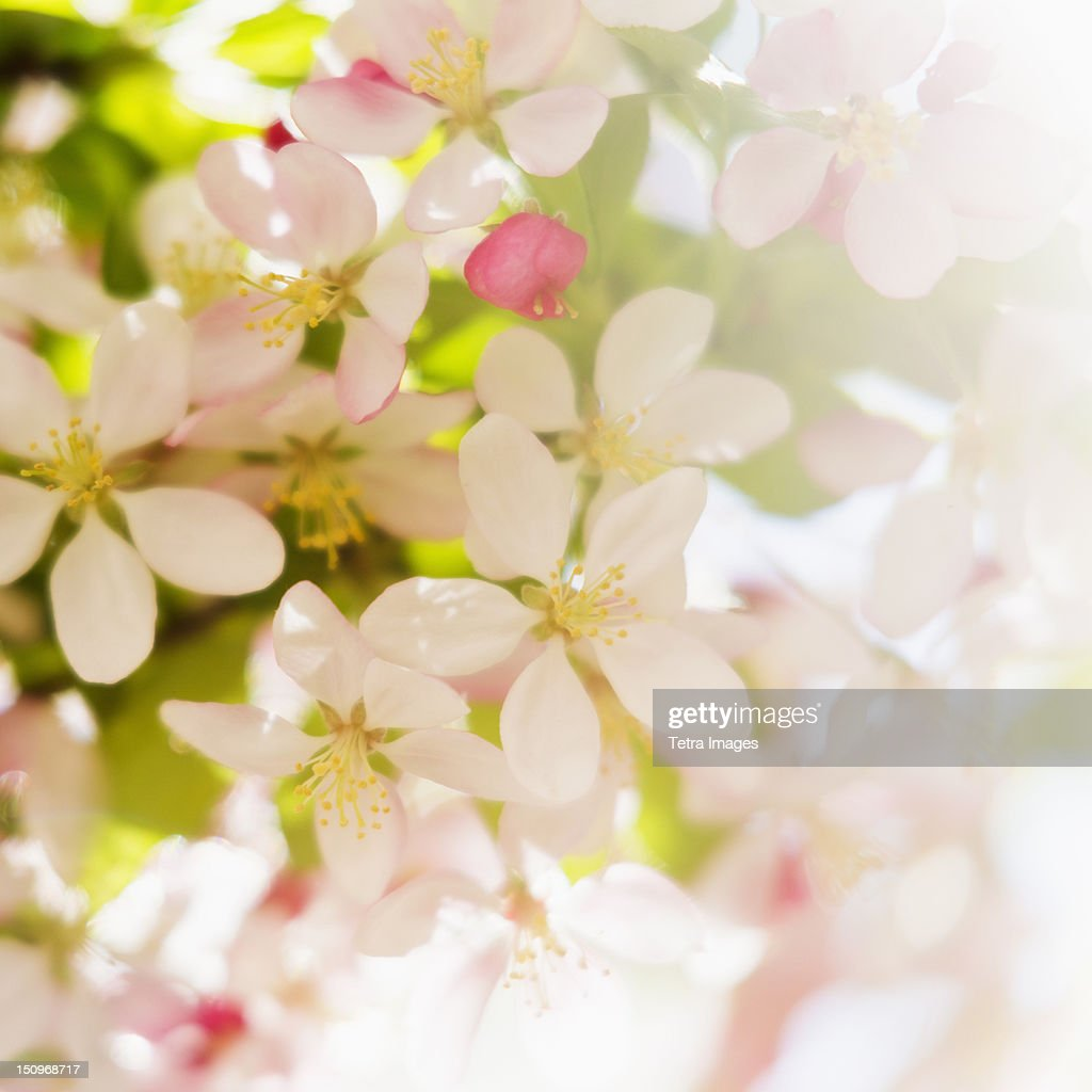 Flower blossoms : Stock Photo