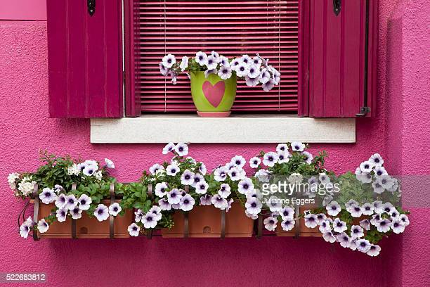 Flower box with petunias below colorful pink window.