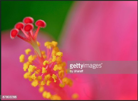 Flower close-up showing stamen.  : Stock Photo