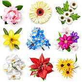 Flower collection isolated on white background. Set of spring and summer garden flowers. Floral design. Top view, flat lay