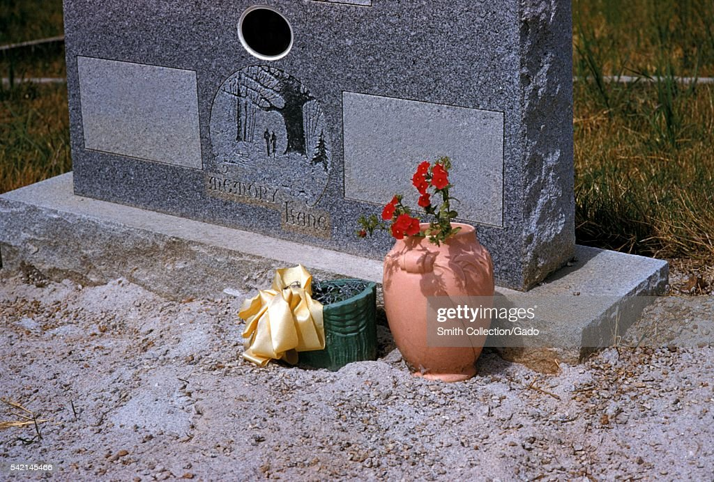 Flower containers act as a breeding place for domestic mosquitoes 1975 Domestic mosquito species are those that breed close to human habitation...