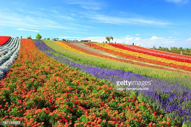Flower field in the countryside, Hokkaido