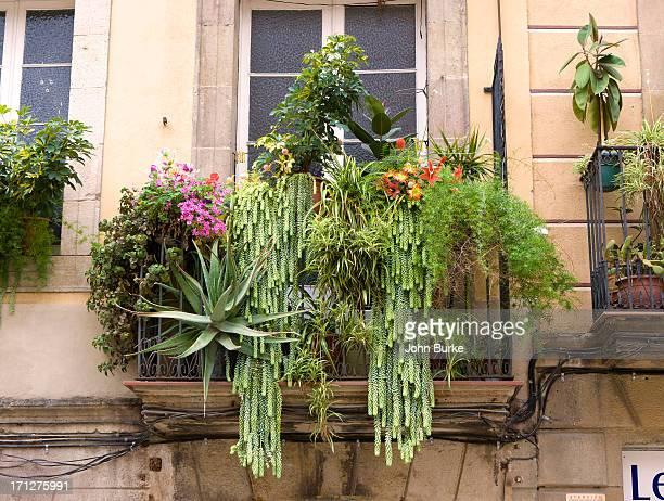 flower filled balcony Barcelona