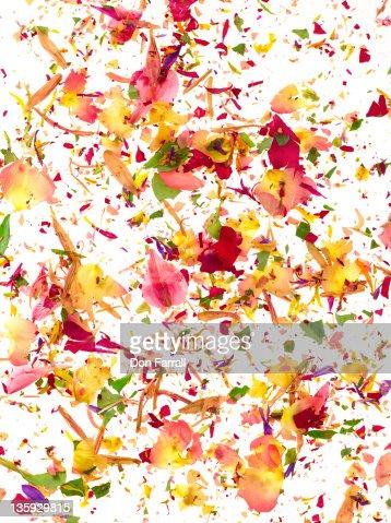 Flower Fragments