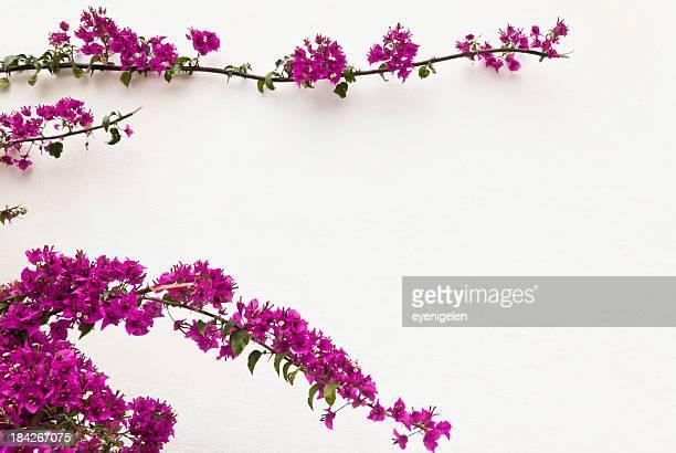 Telaio di fiore