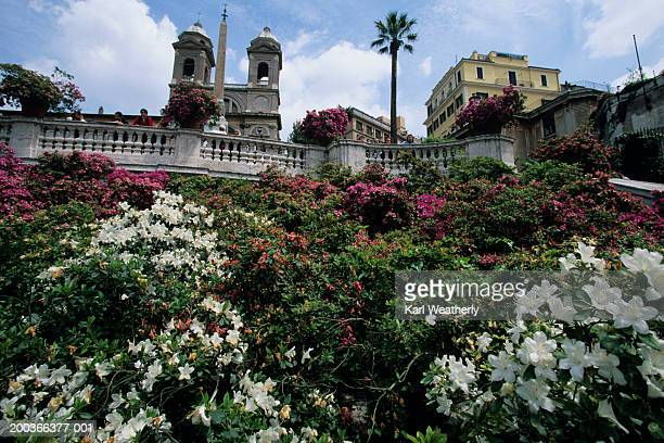 Flower garden at Spanish Steps, Rome, Italy, low angle view