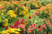 Flower garden in summer