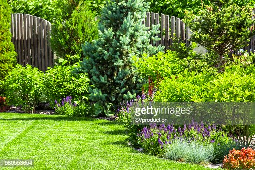 A flower garden in the backyard : Stock Photo