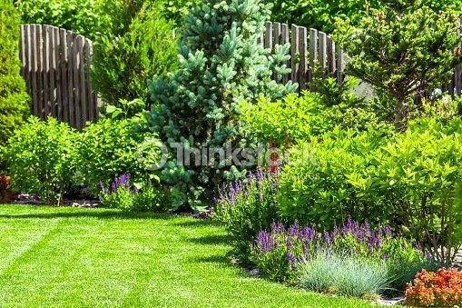 A flower garden in the backyard : Stock Photo