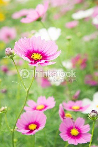 Flower garden in the field pink flowers on the nice happy day stock flower garden in the field pink flowers on the nice happy day stock photo mightylinksfo