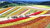 Flower garden of Biei