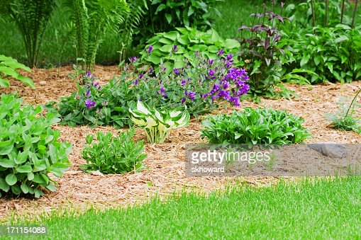 Flower garden with wood chip mulch stock photo getty images for Wood chip mulch vegetable garden