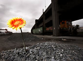 flower grown in unespected place