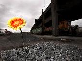 Flor cultivados em unespected lugar