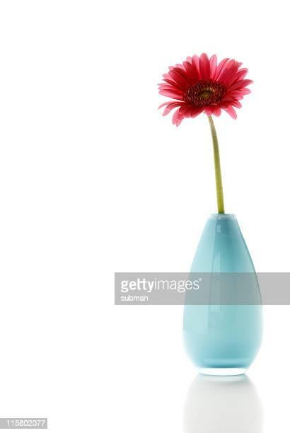 花のポットに白背景
