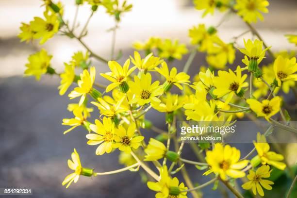 Flower in autumn