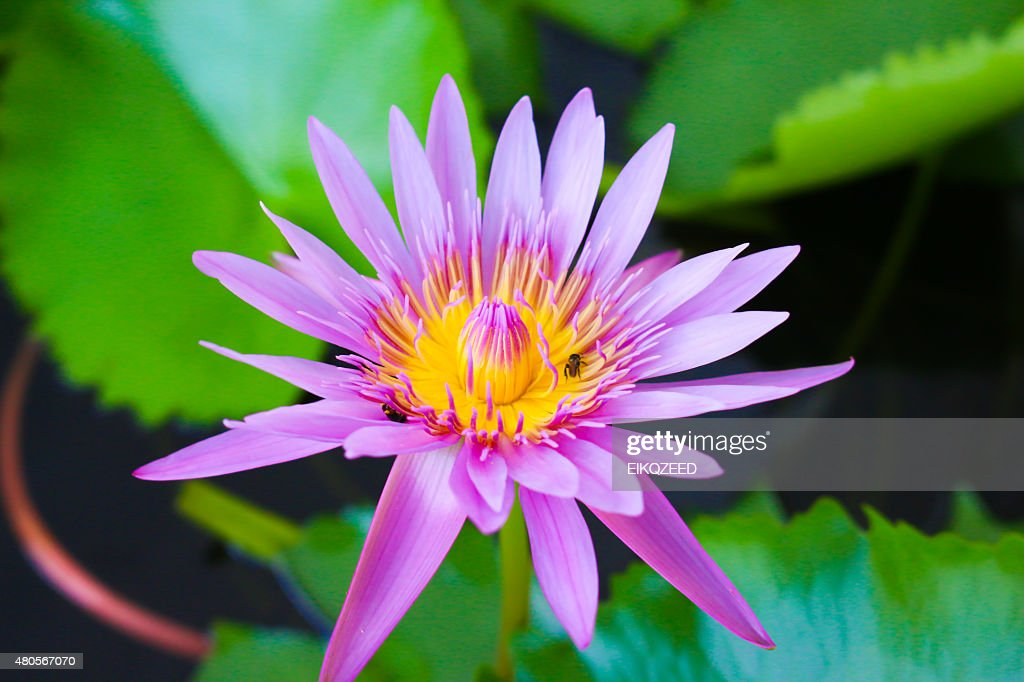 flower in my pool : Stock Photo