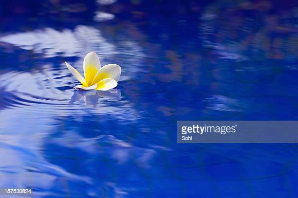 Flower in Pool 02