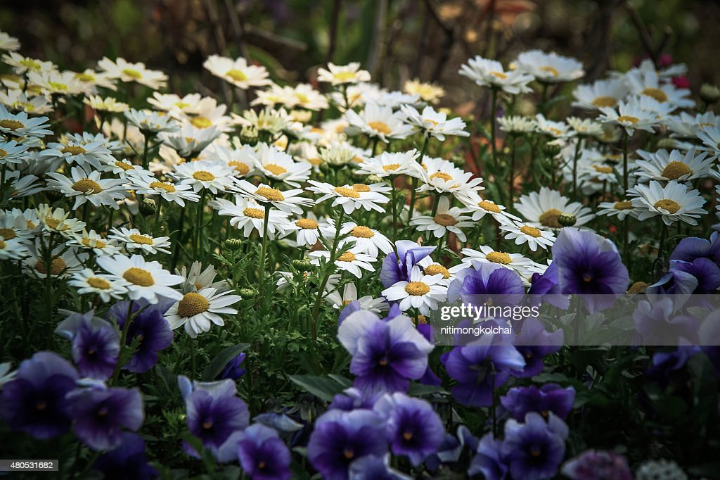 flower in the garden : Stock Photo