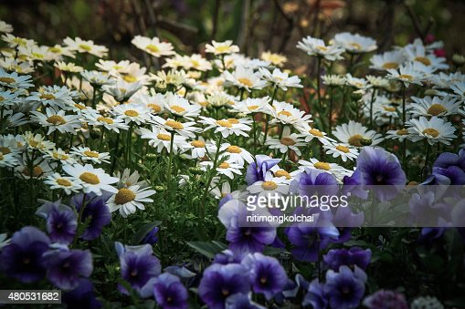 Blume im Garten : Stock-Foto