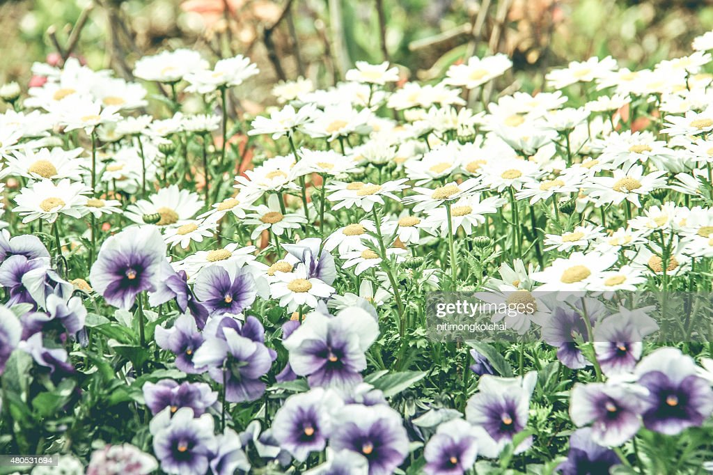 flower in the garden : Stock Photo