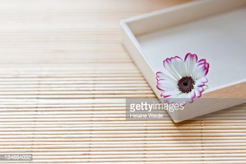 Flower in wooden box on bamboo background.