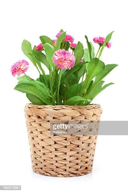 Blume im Topf (XXL) Gewebtes