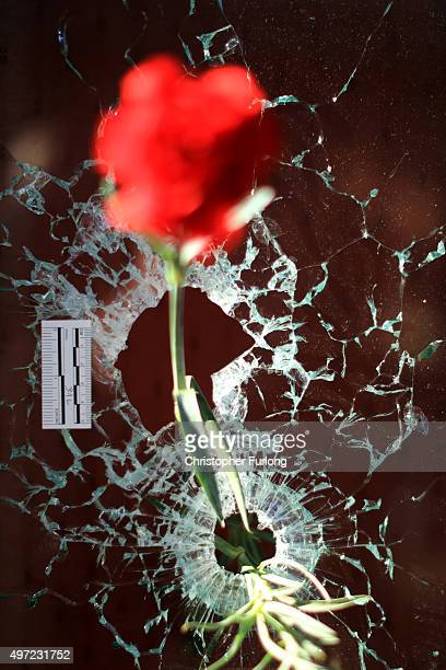 A flower is placed inside a bullet hole in the window of Le Carillon restaurant in tribute to the victims of the terror attacks on November 15 2015...