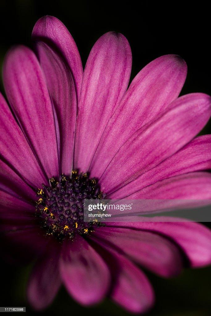 Flower macro : Stock Photo