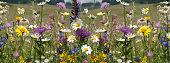 Flower meadow; wildflowers