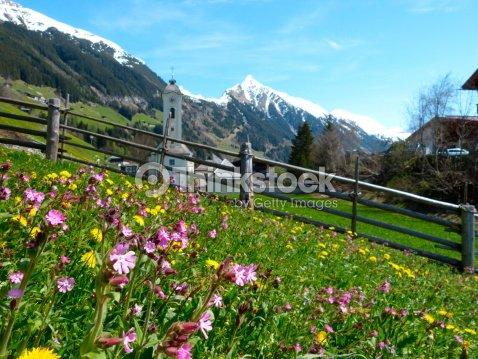 Prato Di Fiori Con Un Villaggio Di Montagna In Background Foto stock ...