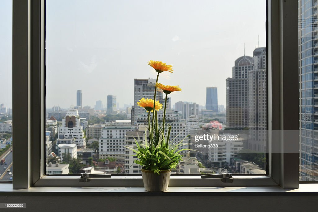 Fiori nei pressi di finestra di office building : Foto stock