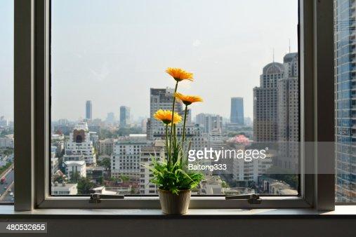 Blumen in der Nähe der Fenster im Büro-Gebäude : Stock-Foto