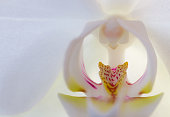 Detail of white orchid flowers. Macro photography
