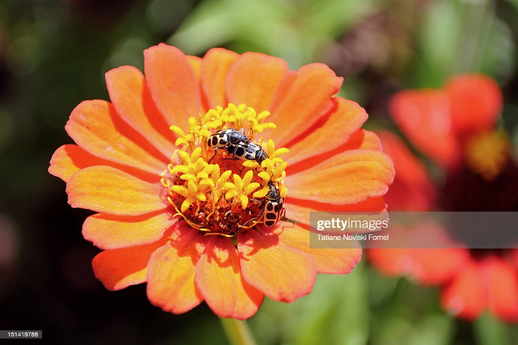 Flower on sunny day : Stock Photo