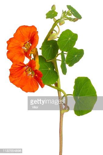 flower on white background : Stock Photo