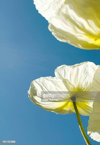 Flower pedels