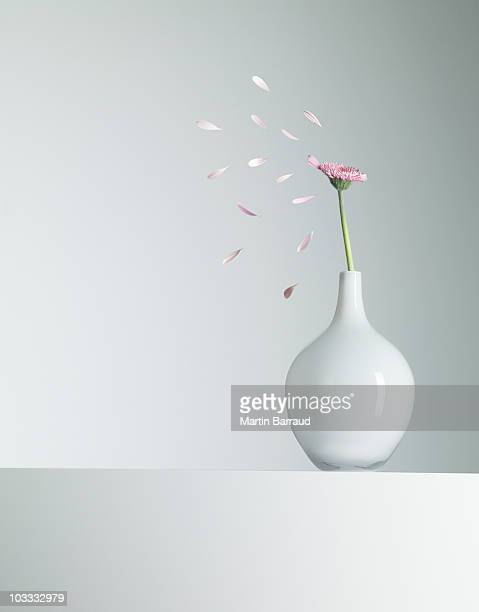 Flower petals flying from pink flower in vase