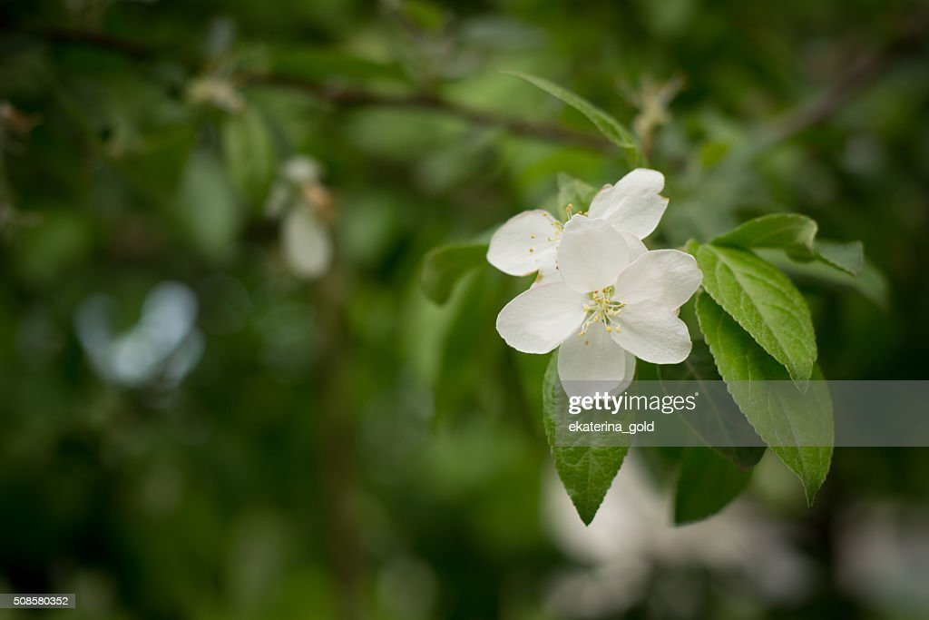 Flower : Stock Photo