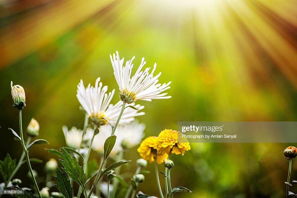Flower : ストックフォト