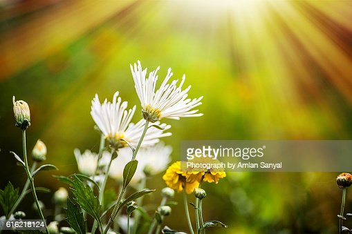Flower : Stockfoto