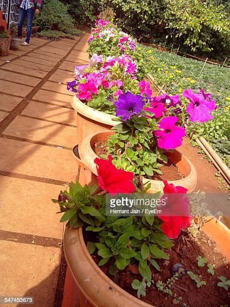 Flower Pots By Footpath In Garden