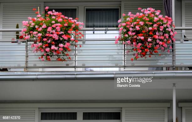 Flower pots with geraniums decorating a balcony