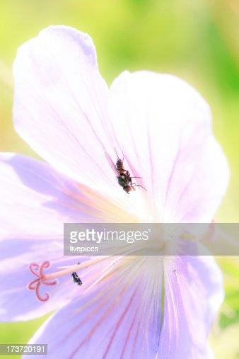 flower power : Stock Photo