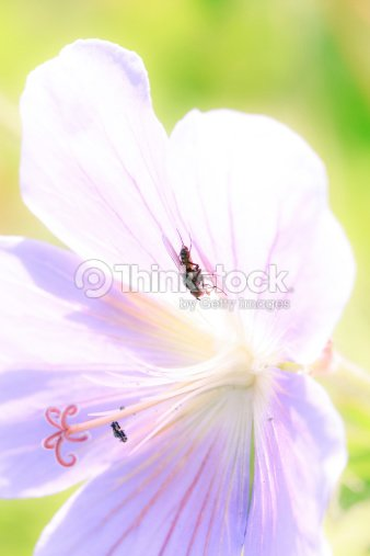 flower power : Stock Photo