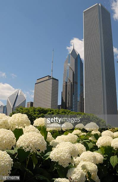 Flower relief amid Chicago skyscrapers